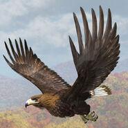 Model Golden Eagle