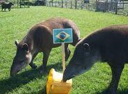 Noah's Ark The Tapirs