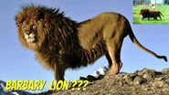 North African lion