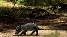 BBC.Walking.With.Dinosaurs.Ep6.Death.Of.A.Dynasty.DivX511.AC3.www.mvgroup.org.avi snapshot 00.43 -2016.10.06 18.26.34-.jpg