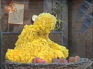 Big Bird falls asleep while demonstrating how birds fall asleep