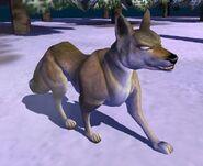 Coyote IC