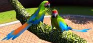 Military-macaw-zootycoon3