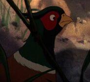 Pheasant, Ring-Necked (Secret of NIMH)