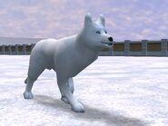 Zt2-arcticwolf