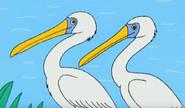 Batw 013 pelicans