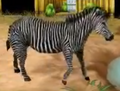 Grevys-zebra-zoo-empire