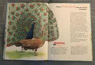 I Wonder How Parrots Can Talk (5)