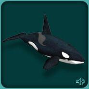 Orca (Blue Fang)