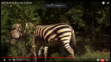 Animal Atlas Zebras