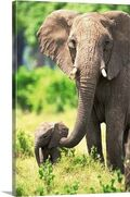 Bf8adc4577a9c9edd772b3bee33f9896--canvas-wall-art-canvas-walls elephants