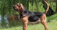 Bloodhound (V2)