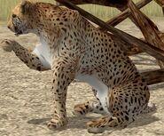 Cheetah-wildlife-park-2