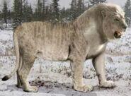 Eurasian Cave Lion (V2)