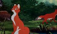 Fox-and-the-hound-disneyscreencaps.com-7444