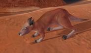 Kangaroo IC