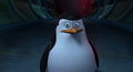 Private find penguins