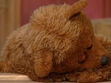 SS-DTA-1996-Baby-Bear-Sleeping