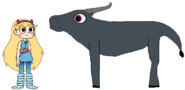 Star meets Domestic Water Buffalo