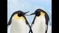 Wonder Pets Save the Penguin