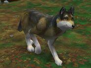 Zt2-mexicanwolf