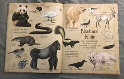 A Curious Collection Of Animals Animals (21).jpeg