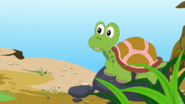 Appu Tortoise