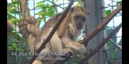 Cleveland Metroparks Zoo Howler Monkey