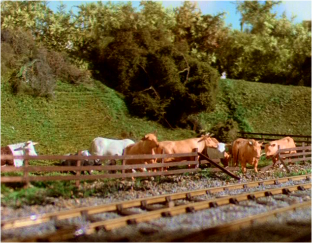Cow (Thomas and Friends)