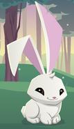 Default bunny9938