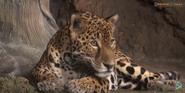 Milwaukee County Zoo Jaguar