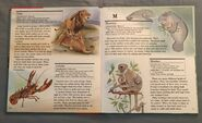 My First Book of Animals from A to Z (14)