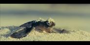 Oceans 2010 Sea Turtle