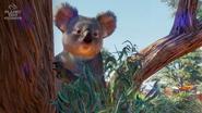 Planet Zoo Koala