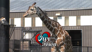 Rolling Hills Zoo Giraffe