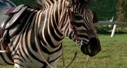 Stripes (Racing Stripes)