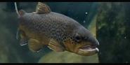Tennessee Aquarium Trout