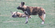WMSP Dogs