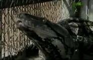 WTAF Reticulated Python