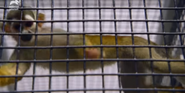 Bronyx Zoo TV Series Squirrel Monkey