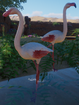 Flamingo, Greater (Planet Zoo)