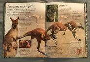 Mammals (Eye Wonder) (10)