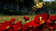 TTTE Bees