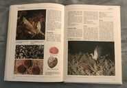 The Kingfisher Illustrated Encyclopedia of Animals (142)