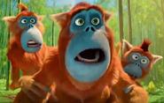 BT Golden Snub-Nosed Monkey