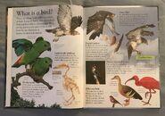 Birds (Eye Wonder) (1)