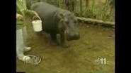 Maximum Exposure Hippo