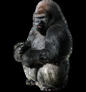NatureRules1 Gorilla