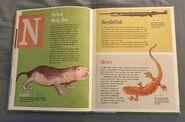 The Dictionary of Ordinary Extraordinary Animals (33)