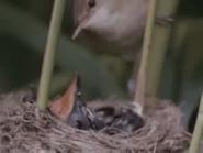 Amazing-animals-activity-center-cuckoo